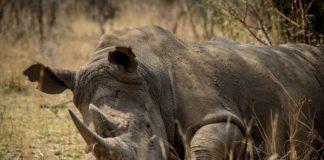 Animali selvatici a rischio estinzione cause e possibili rimedi per tutelarli