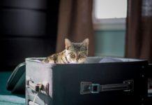 Durante il tuo trasloco con animali, affidati a specialisti del settore