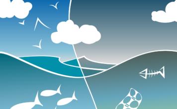 Bonifiche ambientali salviamo il pianeta bonificando il mare