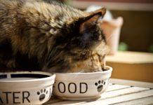 che fare se il gatto non mangia