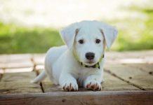 Cucciolo di cane educato