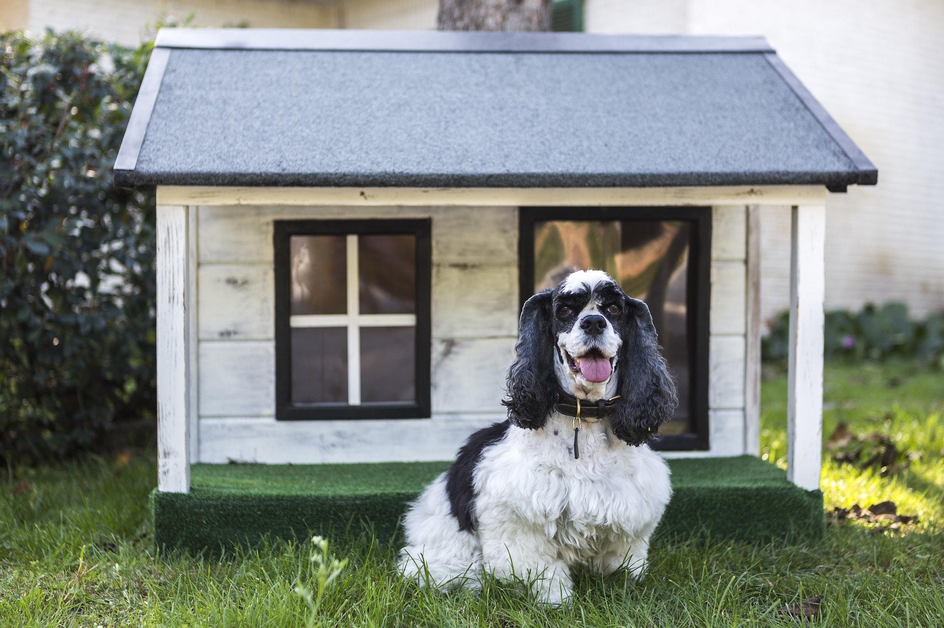 Animali Da Esterno le migliori cucce per cani da interno e da esterno - aipan