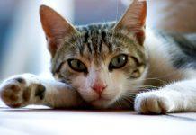 antiparassitari per gatti
